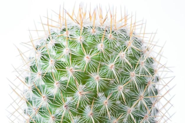 Kaktus im braunen topf auf dem weißen hintergrund lokalisiert.