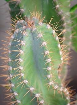 Kaktus im sonnenlicht. grüne sukkulenten oder kakteen zur dekoration.