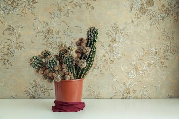 Kaktus im topf im innenarchitekturhaus. freier platz für text
