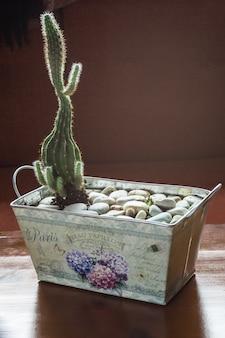 Kaktus im zinntopf mit dekorativen steinen