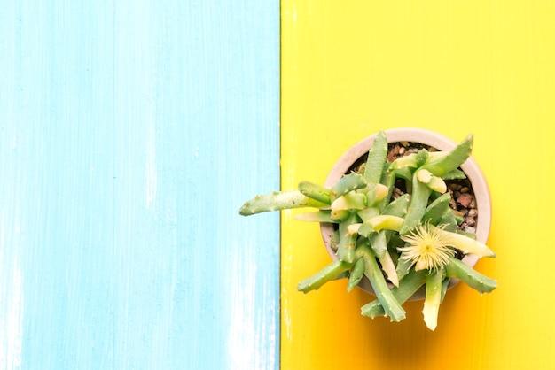 Kaktus in der draufsicht des topfes über die bunten hölzernen hintergründe mit kopienraum