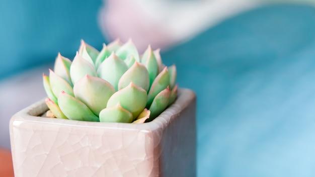 Kaktus in der hinteren ansicht des topfes über die unscharfen bettblatthintergründe