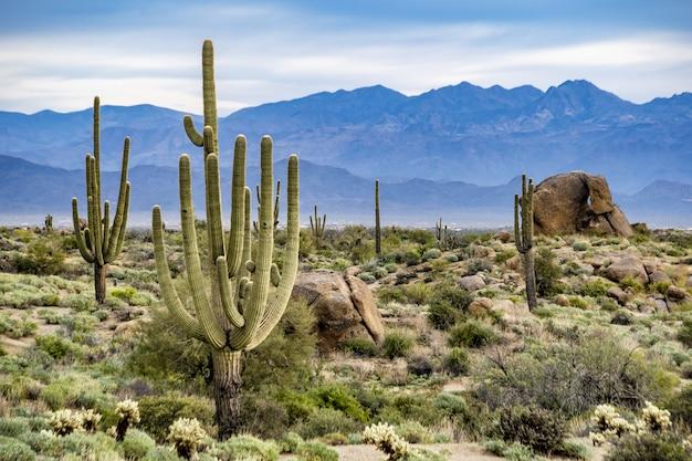 Kaktus in der wüste Kostenlose Fotos