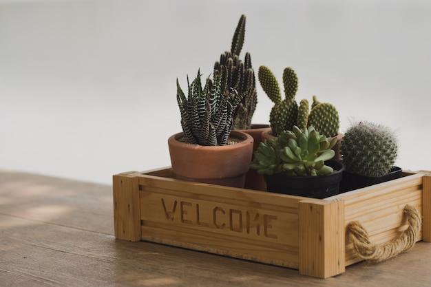 Kaktus in einem café