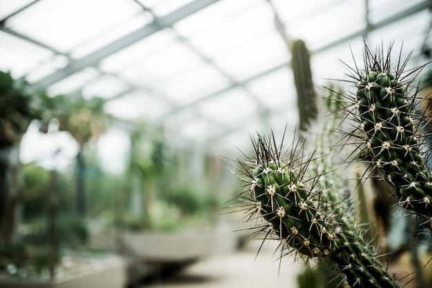 Kaktus in einem gewächshaus.
