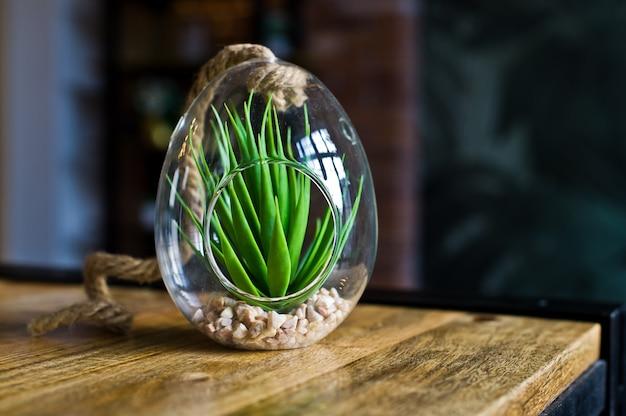 Kaktus in einem glastopf, zimmerpflanze saftig. seitenansicht
