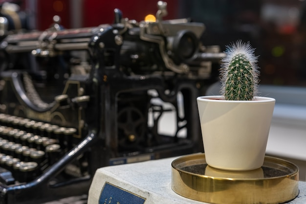 Kaktus in einem topf auf einem alten schreibmaschinenhintergrund.