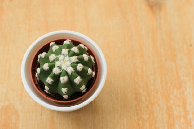 Kaktus in einem topf auf einem hölzernen hintergrund. minimalismus-konzept