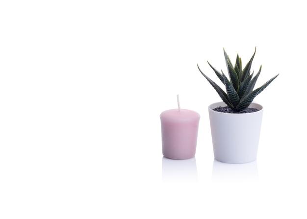 Kaktus in einem topf und und rosa rosenkerze auf weißem tisch