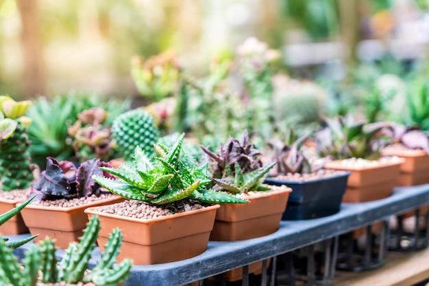 Kaktus in vase