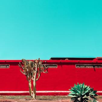 Kaktus. landschaft der kanarischen inseln. modereisekonzept