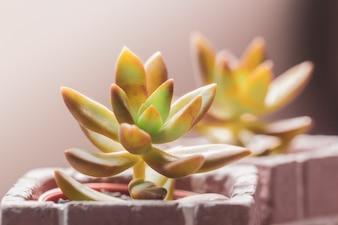 Kaktus mit roter Topfpflanze.