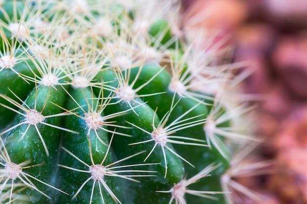 Kaktus mit scharfen dornen, textfreiraum.