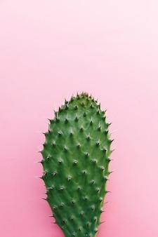 Kaktus mit vielen dornen auf farbigem hintergrund