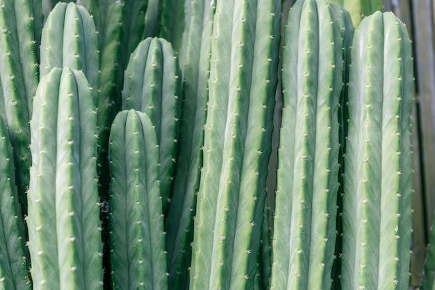 Kaktus nahaufnahme