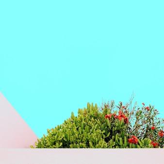 Kaktus. tropische pflanze. kanarische insel