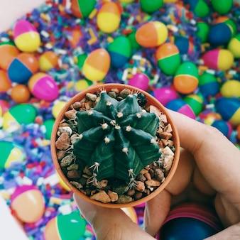 Kaktus und bunte spielzeuge
