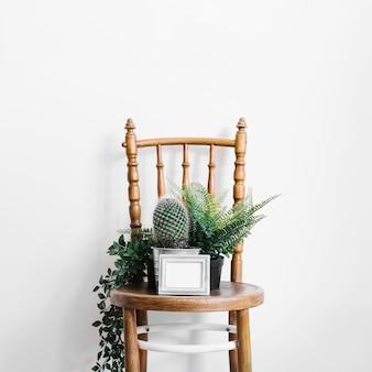 Kaktus und pflanzen auf stuhl