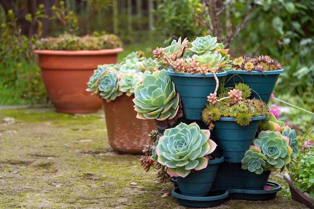 Kaktus und saftige gruppe im topf im freien im garten. nette tropische wüstenpflanze.