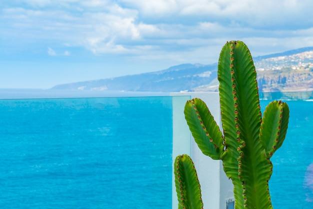 Kaktus wächst auf dem balkon hinter glasgeländer über dem ozean. meer mit kleinen wellen im hintergrund