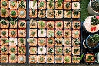 Kaktus Zimmerpflanze Sammlung Set