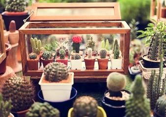 Kaktus-Zimmerpflanze-Sammlungs-Dekorations-Set