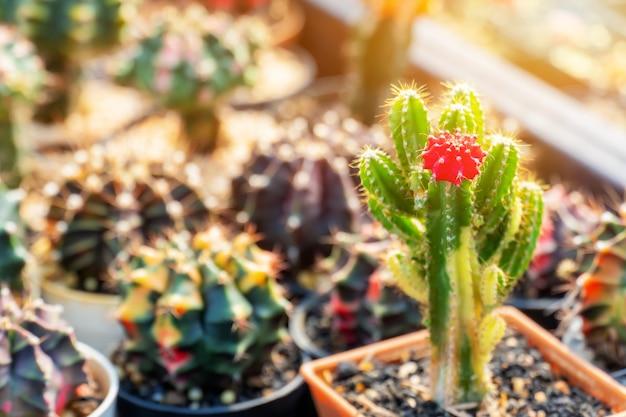 Kaktus, zuckerpalmenblatt, pflanze und baum im garten
