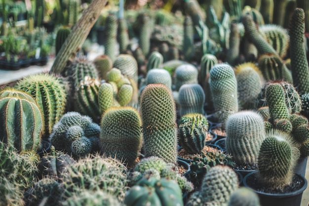 Kaktusbaumnahaufnahme