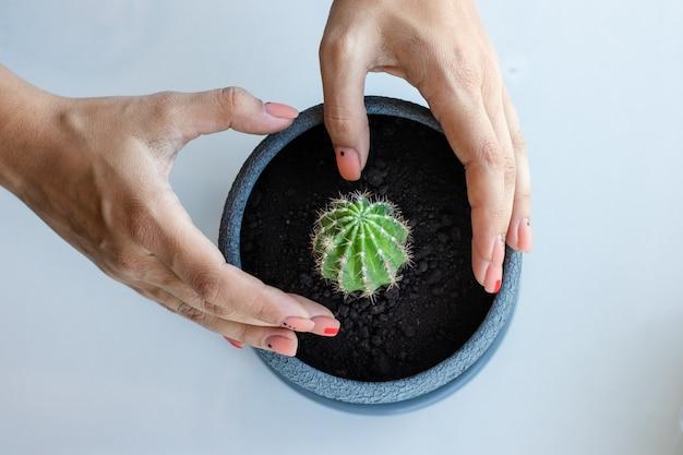 Kaktusblume im topf auf dem weißen tisch und hellem hintergrund. hauspflanzen und innenraumkonzept. die kakteen werden von einem blumentopf in einen anderen umgepflanzt.
