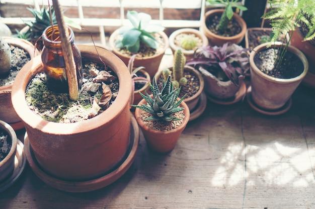 Kaktusblumentopf im café, weinlesefilterbild