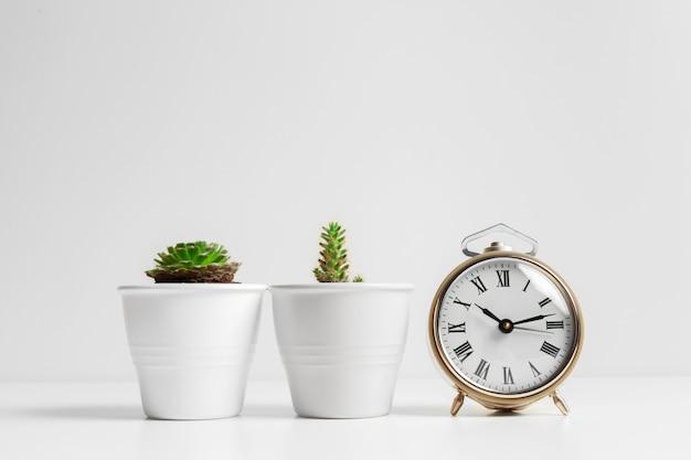 Kaktusblumentopf und weißer wecker