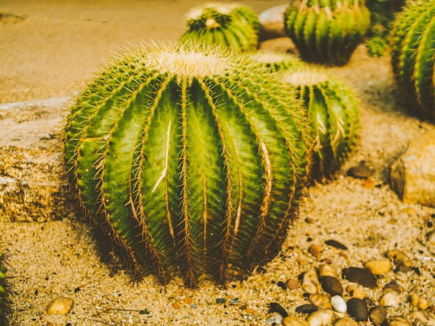 Kaktusdorn hautnah