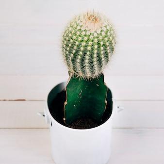 Kaktuspflanze im weißen becher auf hölzernem schreibtisch