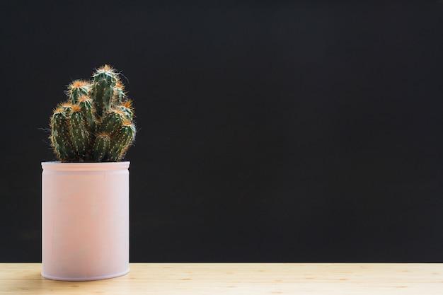 Kaktuspflanze im weißen behälter auf tabelle gegen schwarzen hintergrund