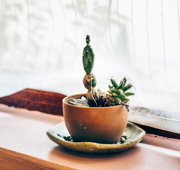 Kaktuspflanze in einem topf am fenster