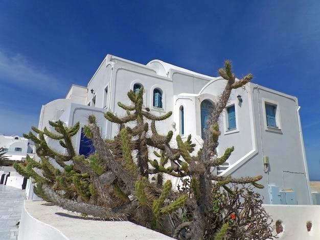 Kaktuspflanzen gegen weiße griechische inselartarchitektur unter blauem himmel