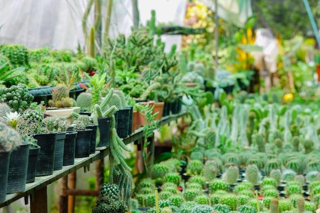 Kaktuspflanzen in töpfen, die im garten angeordnet sind.