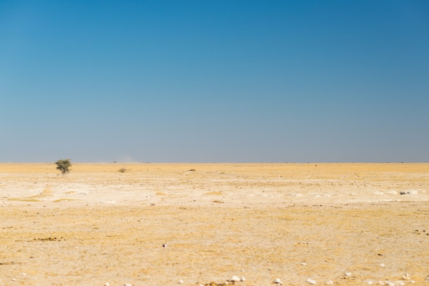 Kalahari-wüste, leere ebene, klarer himmel, autoreise in botswana, reiseziel in afrika