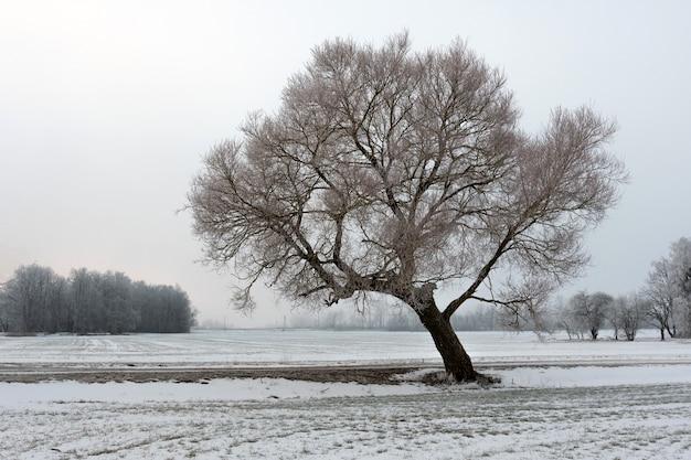 Kalte wintermorgenlandschaft mit einer straße und einem einsamen baum.