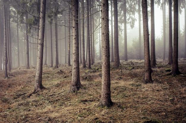 Kalter, gefrorener wald, eingehüllt in nebel