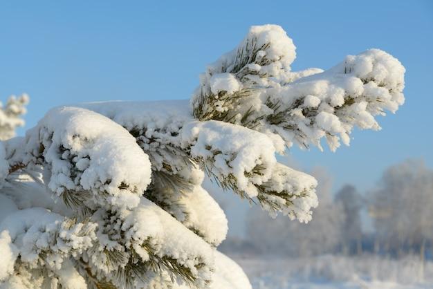 Kalter winter weihnachtsbaum bedeckt mit schnee