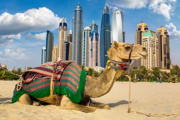 Kamel in dubai marina