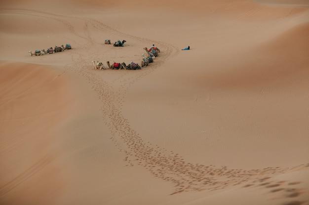 Kamele und führer in der wüstensahara. sand und sonne.