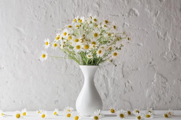 Kamille in der vase auf weißem hintergrund