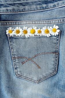 Kamille in jeanstasche. studio-makroaufnahme.
