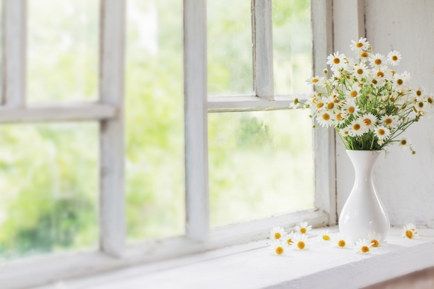 Kamille in vase auf fensterbank