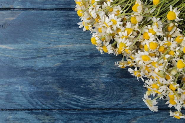 Kamille. medizinische kleine kamillenblüten auf einem blauen holztisch. platz für text. ansicht von oben