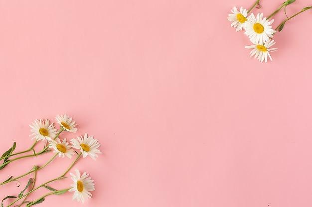 Kamille oder gänseblümchen einzeln auf rosa hintergrund mit beschneidungspfad und voller schärfentiefe.