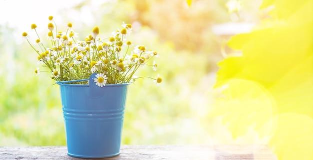 Kamille pflanzenblütenkräuter, die auf einem steinschreibtisch in einem frühlingsgarten liegen. platz kopieren.