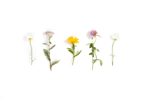 Kamille, schafgarbe, ringelblume, heilblumen des klees einzeln auf weißem hintergrund, flache lage, ansicht von oben